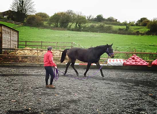 LB Equine Services, Lu lunging one horse